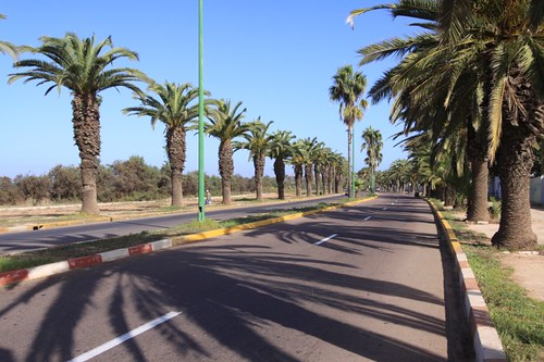 Palm-lined promenade in Mohammedia, Morocco.