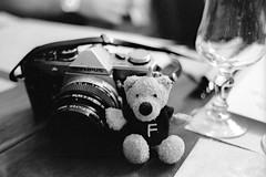 My analogic grizzly (Ilaria ♠) Tags: bw olympus teddybear bologna filippo biancoenero nikonfe2 fotografiaanalogicaitalia
