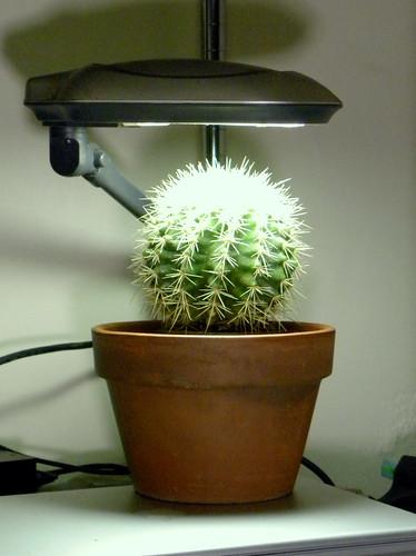 CactusClayPot-1