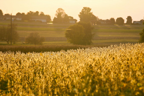 Special Sale Print:  Amish Fields