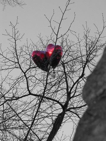 Valentine's Balloons, York