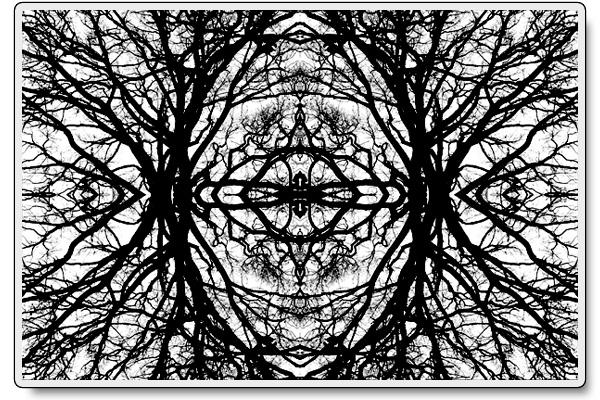 Rorschachträd