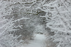 Winter Wonderland (dave millers photos) Tags: winter snow local wonderland footpath