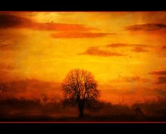 Paysage d'Alsace. (Hatuey Photographies) Tags: france texture landscape alsace paysage arbre paysagedalsace magiayfotografia hatueyphotographies ©hatueyphotographies
