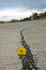 one in a million you (Mikku LLuch) Tags: road flower yellow philippines cagayan mikku garbongbisaya
