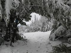 P13, Wolf Trail 037