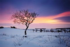 Morning tree (Stuart Stevenson) Tags: winter mountain snow storm cold tree field fence landscape scotland solitude branches hill valley lone mystical lonelytree clydevalley snowcover pleaseviewlarge stuartstevenson blimmincold 6layersofclothes thatsnotgrass thoseare3ftmarshreeds