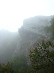 Foggy Goat Rock Photo