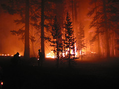 Fire on Shasta-Trinity NF (Photo credit: USFS Region 5)
