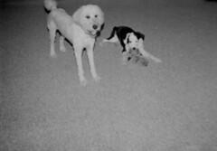 Lily and Lucy (David Cory) Tags: film 35mm toycamera diafine akira plasticcamera trix400 tc002