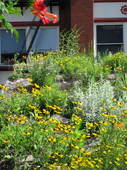 ASLA's green roof in bloom (by: ASLA)