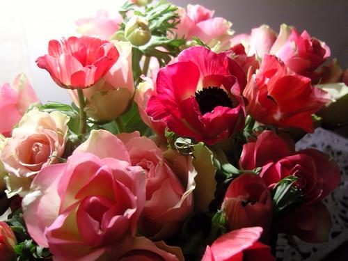koraalrode rozen 023
