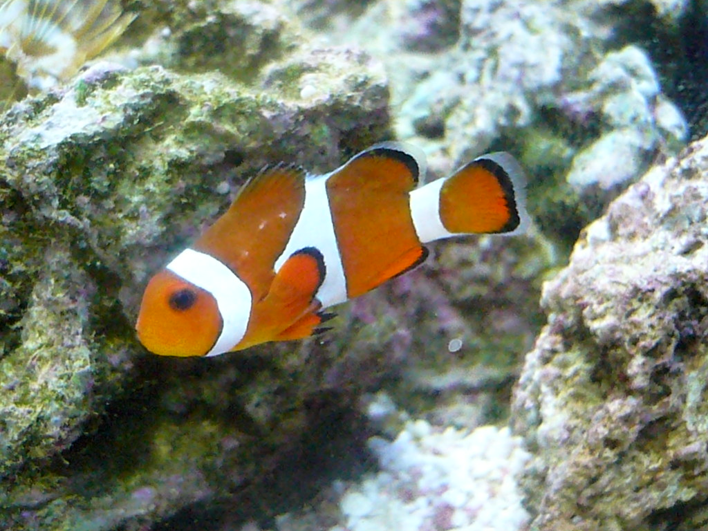 Please tell me this is not ICH ( ICK?) - Reef Central Online Community