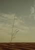 """' (Queen333""""آذڪروآ آلله) Tags: landscape البر ان اللي قلبي لي مطر ربيع القهوه والا ترى الغيوم غادة اسلم السماء الجروح العصر اجر وعافيه وسيع صدري قلتها زادت لاتخاف عنيزة الغضا لاصارت والكلمه وافيه"""