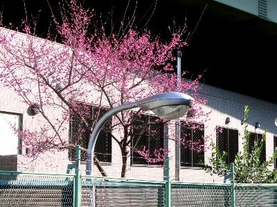 阪神高速の梅
