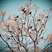 64/365 (Extra): Birds in Tree