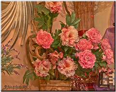 A Special Women's Day (krisdecurtis) Tags: pink flowers red italy woman love nature beautiful rose canon women italia 300d campania canon300d rosa natura kris fiori rosso amore 2010 internationalwomensday womensday march8 8marzo maddaloni iwd festadelledonne krisdecurtis platinumheartaward