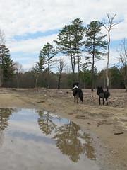 Trees, dogs (jnoc) Tags: dog dogs montague montagueplains