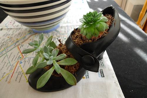 shoe planter