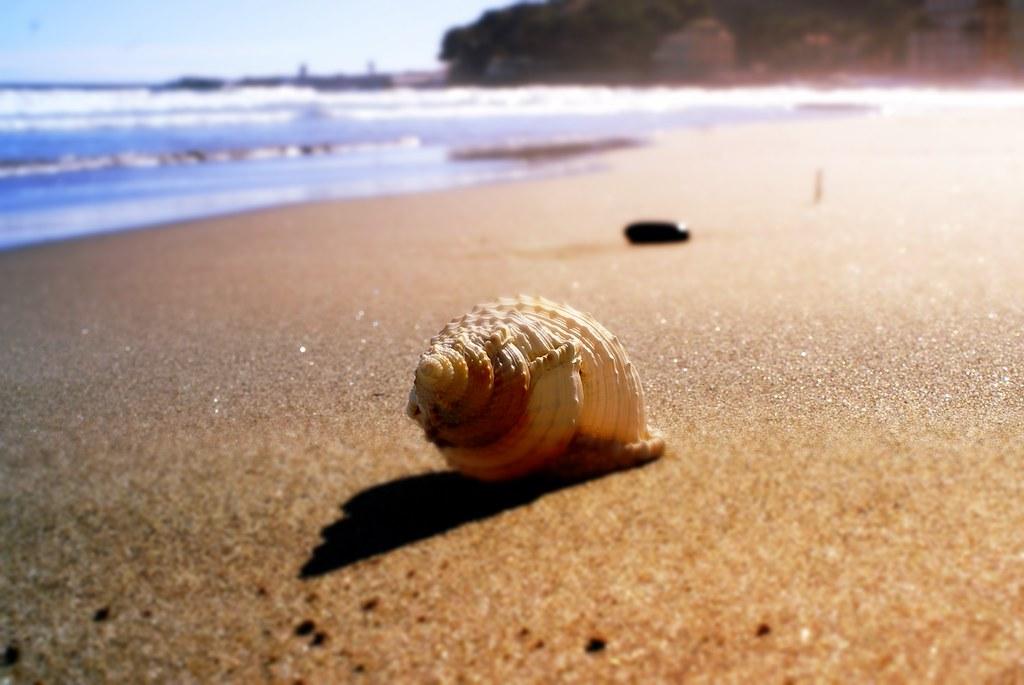 La conchiglia del mare