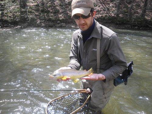 14 Inch + Wild Brown Trout