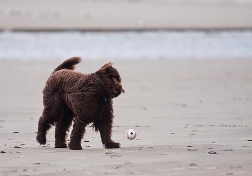 ewok ball chasing