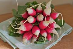 Radish Bunch (sophiemostly) Tags: radish prettyinpink inmykitchen morimono bunchofveg