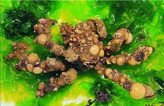 墾管處公布境內5種珊瑚礁毒蟹,提醒民眾不要捕食。其一,鈍額曲毛蟹。(圖片來源:何平合博士提供)