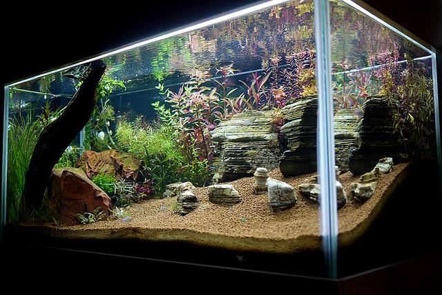 Tony?s Albert Namatjira inspired Australian aquarium landscape is ...
