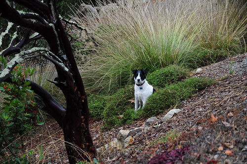 Lucy would rather sit in a bush until all this wine stuff is over with.