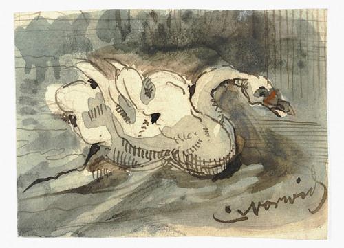 009- Cisne blanco-Cyprian Kamil Norwid- 1821-1883