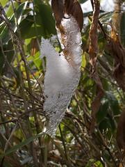 雪と氷の葉っぱ
