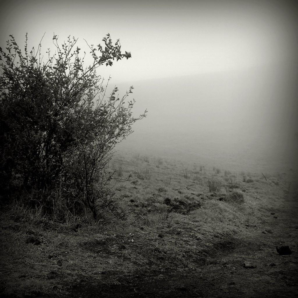 forgetfulness land #P1220948