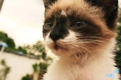 Meow! (alineioavasso) Tags: cute cat gato filhote gatinho
