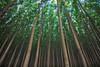 Poplar Grove (Jesse Estes) Tags: trees oregon canon poplar 1635ii 5d2 jesseestesphotography