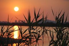 Tramonto sullo stagno (Tamparinu) Tags: tramonto sole saline cagliari poetto molentargius canneto quartusantelena