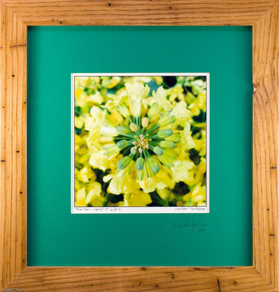 Framed Prints MG 1309