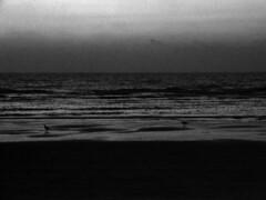 (zijvandebieb) Tags: sea seagulls zee meeuwen