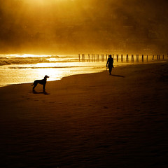 Walking the dog (borealnz) Tags: city houses light sunset newzealand summer dog sun texture beach silhouette square person evening sand stclair walk nz otago dunedin lightrays bsquare thelittledoglaughed pentaxart flypapertextures borealnz