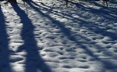 Snow Shadows (RockN) Tags: christmas winter massachusetts snowstorm newengland 2009 worcester 2009~2010
