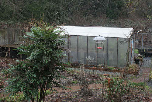 Orchid Greenhouse in Winter