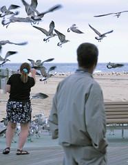 pb_IMG_4505 (Dysthymic Arrhythmia) Tags: ocean seagulls birds boardwalk