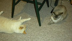 yai chai and squeeky siamese mixed cats (plumaluna07@sbcglobal.net) Tags: cats doll siamese joe indians figures gi