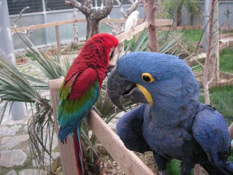 jardin-del-papagayo-3