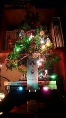 Winter-een-mas tree, arbol (Reijard) Tags: tree árbol wintereenmas