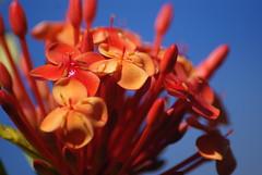 Flores e cores 2 (Anselmo Garrido) Tags: flores flor stock jardim jardins colorido flickrstock