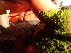 tractor birds nest bonnet