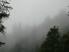 Mist by dhammadharini