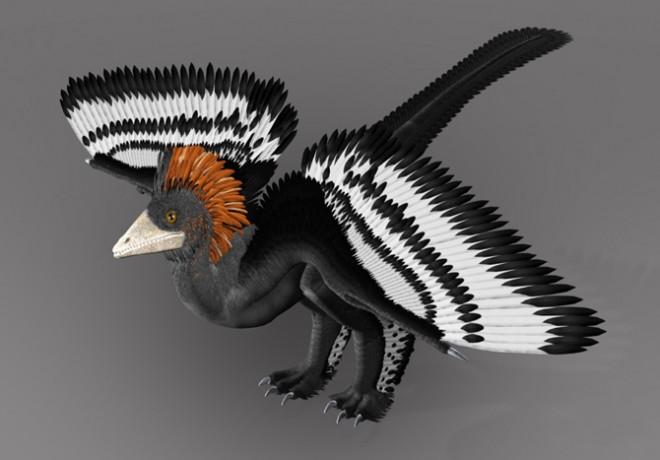 dinosaur_feathers2-660x460