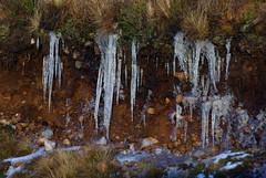 IMGP9223 (jack_spellingbacon) Tags: winter scotland highlands labrador sutherland chocolatelabrador gundog wordy5